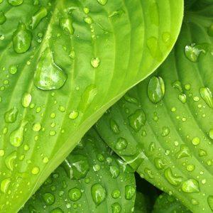 Démarche écologique et environnementale